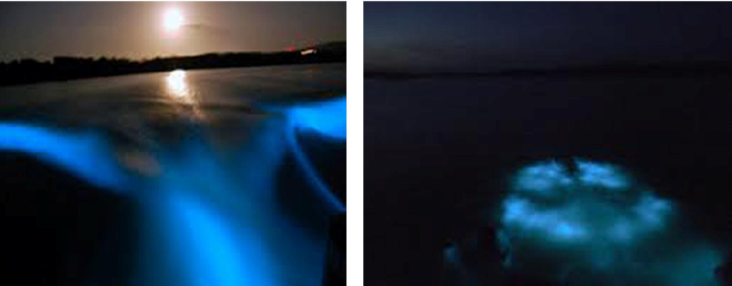 Luminous Lagoon Banner